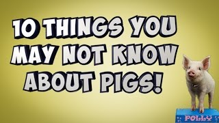 10 Things You May Not Know About Pigs