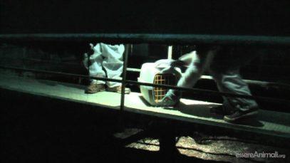 12 conigli riscattati da un allevamento intensivo