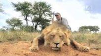 15.000 Euro per uccidere un leone