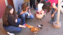 A glimpse of an Animal Place tour.