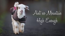 Ain't No Mountain High Enough – Frostie The Snow Goat Update