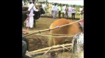 Animal Equality fa mettere al bando le corse con carri trainati da buoi