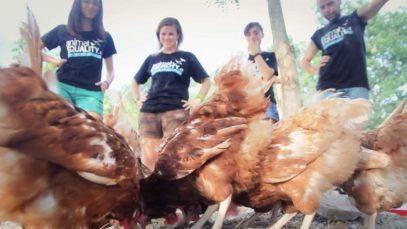 Animal Equality salva 10 galline ovaiole ed espone l'industria avicola biologica