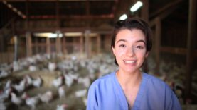 Animal Place Rescues 3,000 Hens from Egg Farm