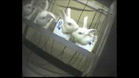 Animal testing at Wickham Labs