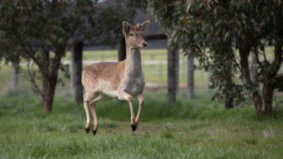 Bambi Bouncin'