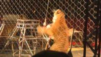 Benvenuti al Circo con Animali!