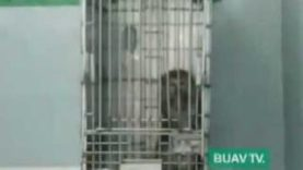 BUAV undercover footage reveals shocking monkey trade in Indonesia