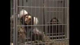Cambridge University animal tests