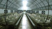 Caracierzos – Allevamento di foie gras | Una investigazione di Animal Equality