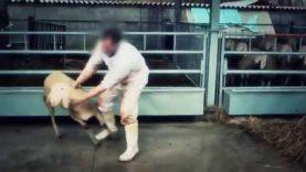 Crudeltà Rituale – Un'investigazione di Animal Equality