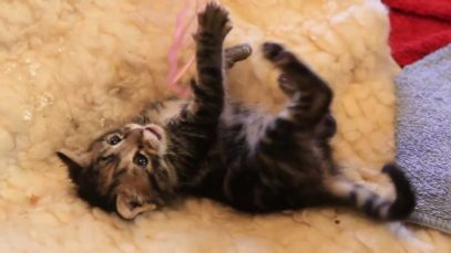 Cuteness Alert!! Jessica Kitten playing with her toys!