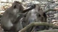 End primate research in the UK