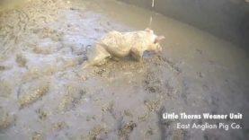 Filth | East Anglian Pig Co.