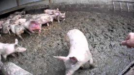 Filth | Harling Farm