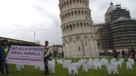 FLASH MOB! Liberati 60 agnelli sotto la Torre di Pisa
