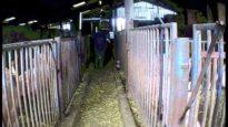 Handling | Harling Farm