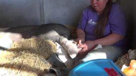 Help Animal Place sanctuary!