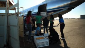 Hens On a Plane: Animal Place's Coast to Coast Airlift