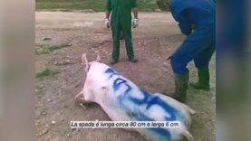I maltrattatori dell'allevamento Escobar sotto processo