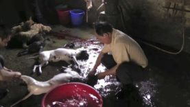 Il Crudele Commercio della Carne di Cane in Cina | Un'investigazione di Animal Equality