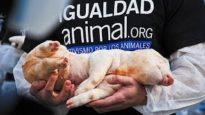 International Animal Rights Day 2010   Madrid (Spain)