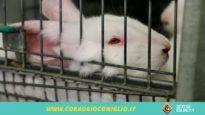 """La breve vita del coniglio da allevamento – Prima Parte """"L'attesa"""""""