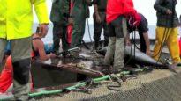 La Mattanza dei Tonni Smascherata | Una investigazione di Animal Equality