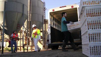 Largest California Farm Animal Rescue – Inside A&L Egg Farm
