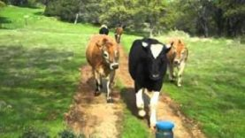 Moving Happy Cows to Greener Pastures