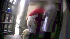 Nessuna pietà – La sofferenza degli agnelli e capretti allo scoperto