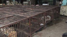 Nuova investigazione sul commercio della carne di cane e gatto in Cina