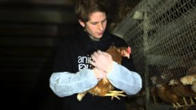 Open Rescue of 6 hens from a free-range farm