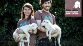 PALLA e LANA due agnelline fortunate