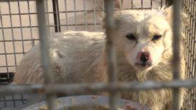 Pelliccia di cane – Un'investigazione di Animal Equality – Cina – 2015