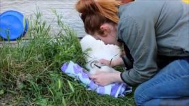Pregnant Goat Saved After 18 Hours in Labor