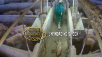 Prosciutto Crudele di Parma – Un'indagine shock