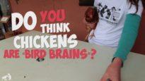 "Rethinking ""Bird Brain"""