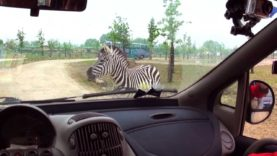 Safari Ravenna – Animali in cattività per business