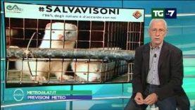 #Salvavisoni al Meteo di La7
