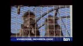 Servizio del TG1 dedicato all'investigazione sul traffico di primati