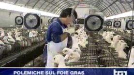 Servizio del TG1 dedicato all'investigazione sul foie gras
