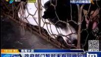 Servizio del TG1 sulla chiusura di 33 rivenditori ed 1 macello di carne di cane e gatto in Cina