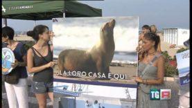 Servizio TGR Emilia Romagna sulla protesta al Delfinario di Rimini | Essere Animali