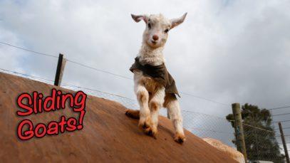 Sliding Goats