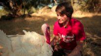 Sponsor a Turkey – Don't Eat One!