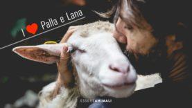 Una bella vita per Palla e Lana, agnelline salvate dal macello