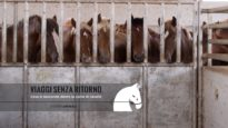 VIAGGI SENZA RITORNO – Cosa si nasconde dietro la carne di cavallo