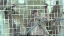 Vittime della sperimentazione – Una investigazione di Animal Equality