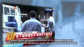 Vittoria in Cina! Chiusi 33 rivenditori ed 1 macello di carne di cane e gatto